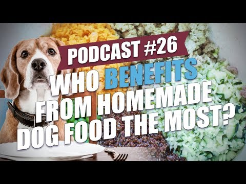 TOP 026: Who Benefits from Homemade Dog Food the Most?