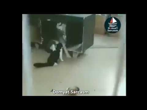 كرتون القط المشاكس