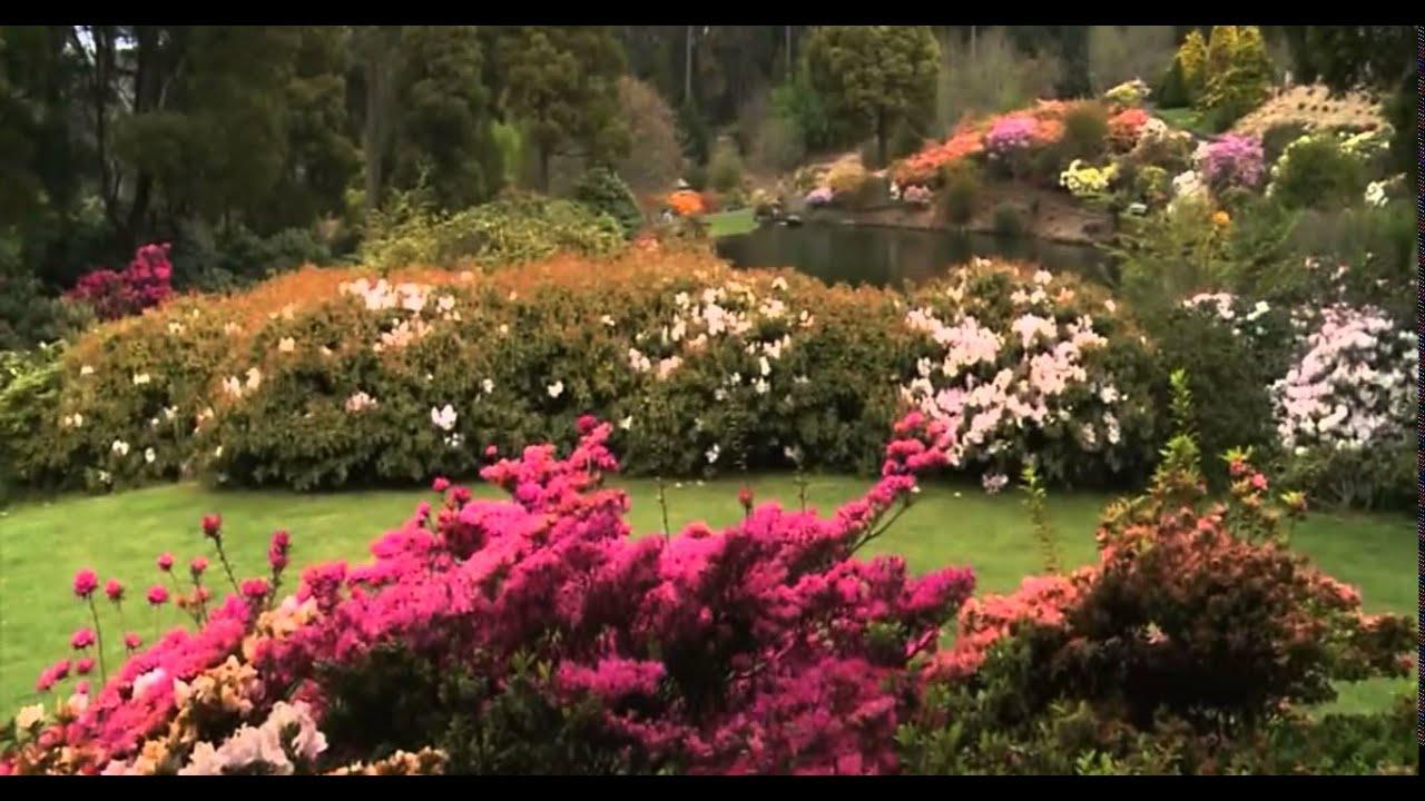 Emu Valley Rhododendron Garden Burnie Tasmania - YouTube