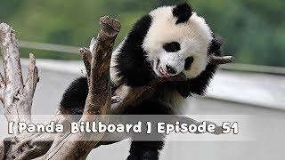 【Panda Billboard】Episode 51 | iPanda