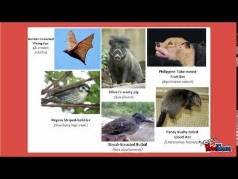 Philippine biodiversity