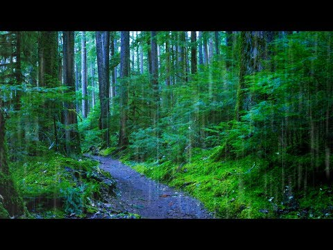 Sleep, Study or Focus with Rain Sounds in The Woods White Noise | 10 Hours