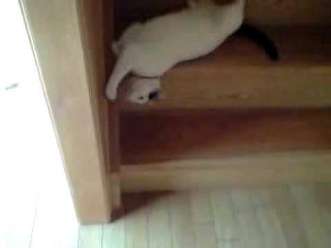 die katze rutscht die treppe runter youtube. Black Bedroom Furniture Sets. Home Design Ideas