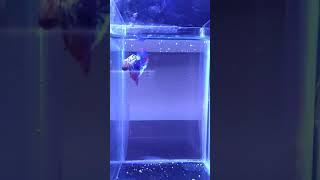 Aquarium Sekat Mini Ikan Cupang Dengan Lampu Led Di Lapak Lucky Art Bukalapak