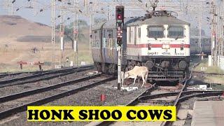Mumbai Dehradun Express Shoos Holy Cows | Bamnia