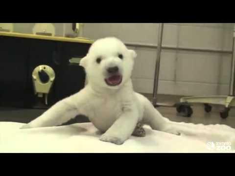 ลูกหมีขาว น่ารักจัง