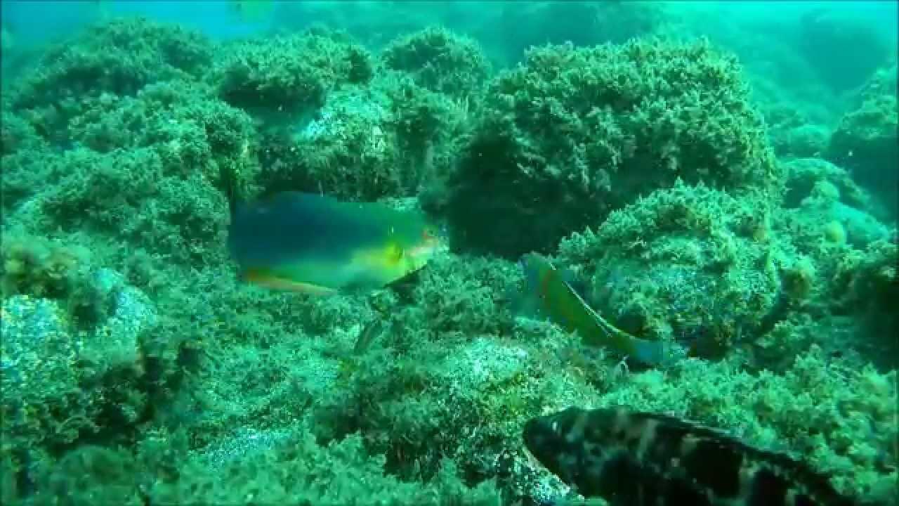 Resultado de imagem para fundo do mar, açores