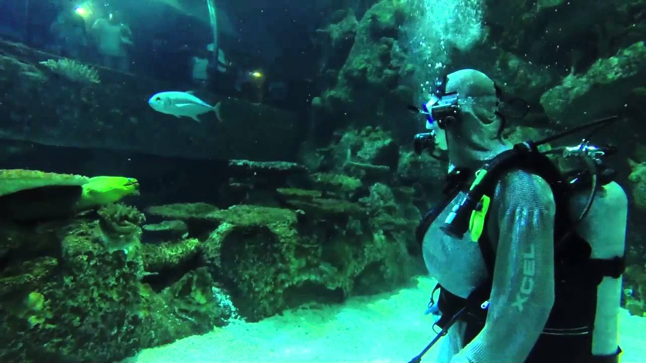 mandalay bay shark reef diving with the sharks youtube