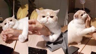 ขอกอดหน่อย!!!🐱🐱  แมวขอกอด จนทำงานไม่ได้