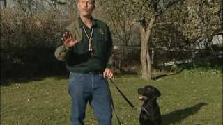 Tom Dokken - Stay Command - Www.sportdog.com