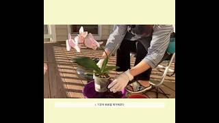 Water culture orchids -난 화분 수경…