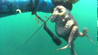 Sines, Portugal Spearfishing the North Shore ( Pesca Submarina na Costa Do Norte)