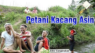Download Video Curhatan Petani Kacang Asin cak percil komedi MP3 3GP MP4