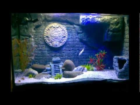 Diy aztec mayan themed 3d aquarium update 2 4 month for Aquarium decoration diy