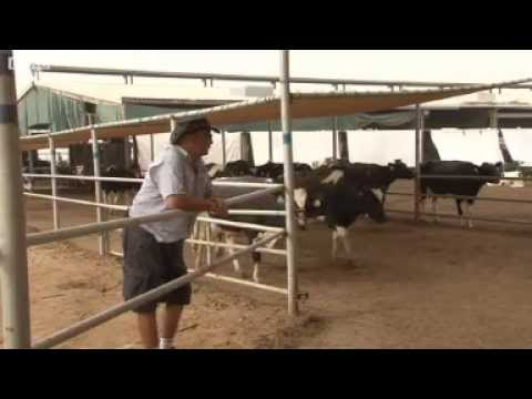 AL Rawabi Dairy Farm , Dubai _ UAE with Dr. Rami 2013