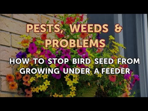How To Stop Bird Seed From Growing Under A Feeder