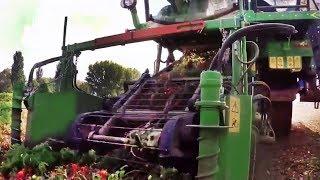 Комбайны, машины для механизированной сбора урожая  Овощи и фрукты Harvester for harvesting