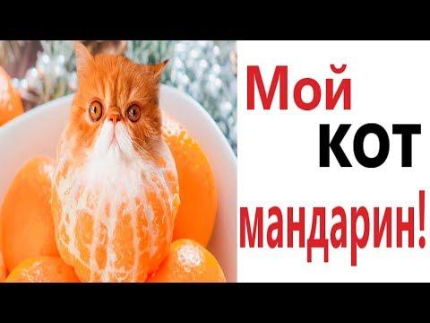 Лютые приколы. МОЙ КОТ МАНДАРИН!!! Самое смешное видео! Попробуй не засмеяться! - Domi Show!