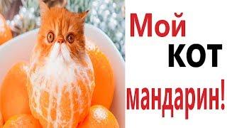 Лютые приколы МОЙ КОТ МАНДАРИН Самое смешное видео Попробуй не засмеяться Domi Show