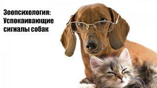 Зоопсихология: Успокаивающие сигналы собак