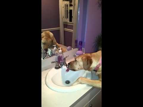 Chloe the dog turns on faucet