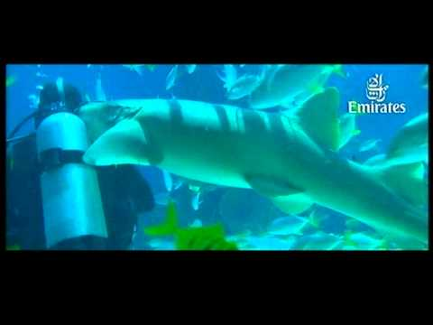 Emirates Airline x Dubai Aquarium CM
