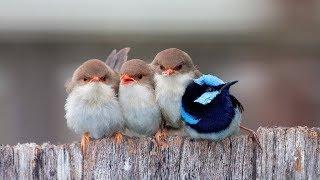 Прикольные видео с птицами