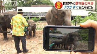 休園動物園が生動画配信 園長さんの解説も大人気(20/04/27)