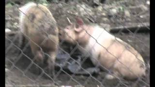 Эти милые животные