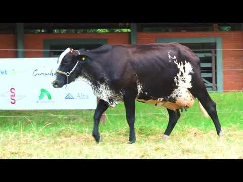 LOTE 14   2904 BE