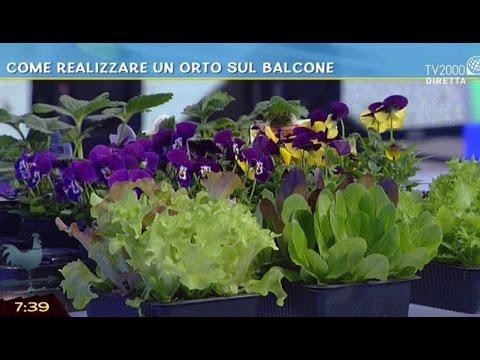 Come realizzare un orto sul balcone - YouTube