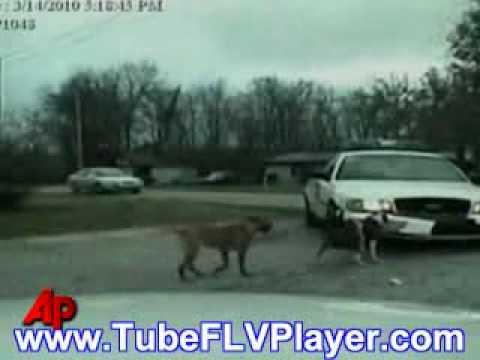 Raw Video Dog Attacks Police Cruiser.WMV