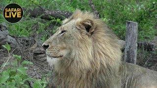 safariLIVE - Sunrise Safari - January 7, 2019