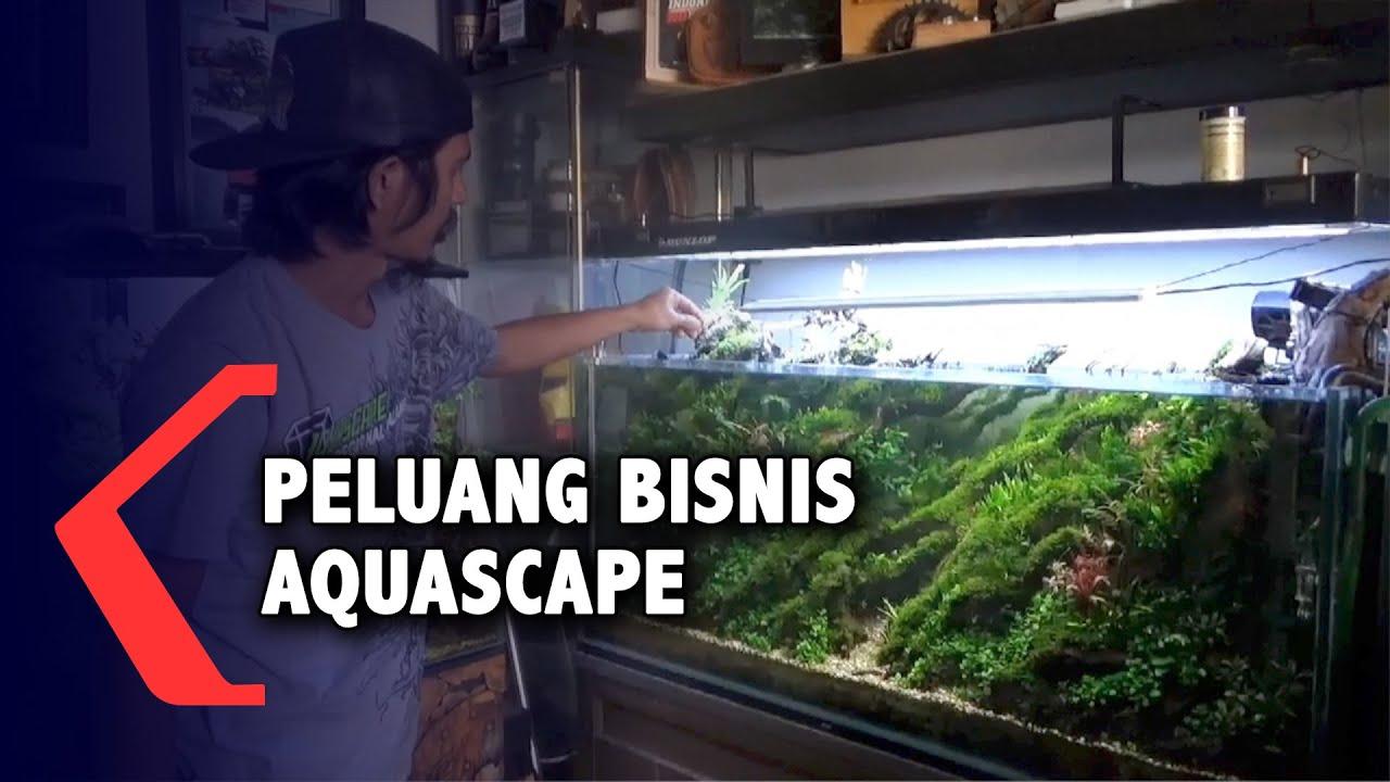 Peluang Bisnis Aquascape Youtube