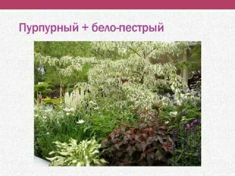 Наталья Мягкова — Пурпурный цвет в саду. Как избежать ошибок при создании композиции.