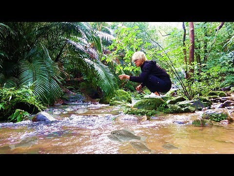 肉食魚の楽園。南の島で釣りをしたら無限に釣れ続けた!!!【大自然、ASMR】