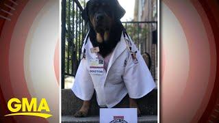 'GMA' Pet of the Week: Meet Dogtor Loki l GMA
