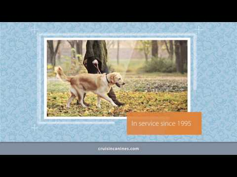 Bucktown, IL Dog Walkers | Professional Dog Walking Company
