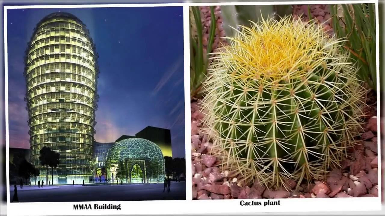 10 Nature Inspired Architectural Designs