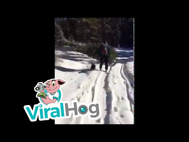 How To Get A Christmas Tree in Bozeman    ViralHog