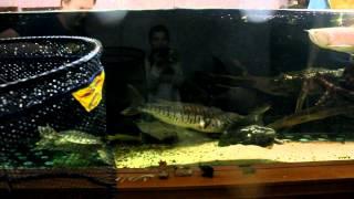 Будівництво акваріума на 1800л (Частина 6 Рибалка)