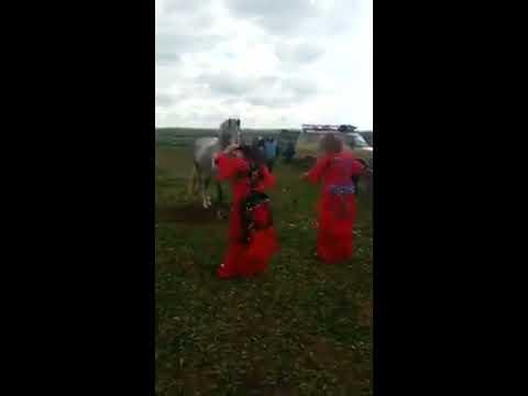 ثلاث راقصات يرقصن مع حصان لتبوريد tbourida Maroc 2018