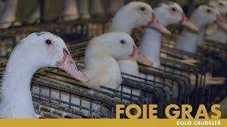 FOIE GRAS, solo crudeltà - un'indagine di Essere Animali