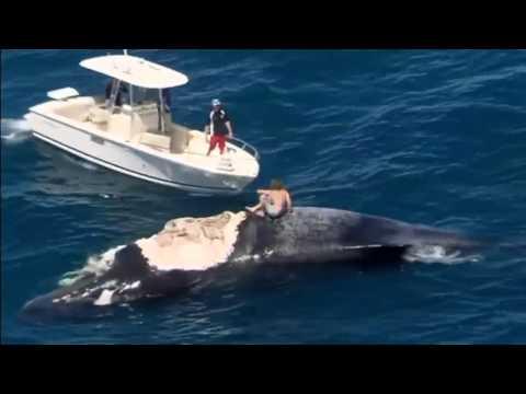 Australian man rides dead whale