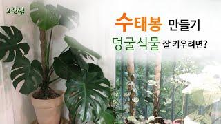 수태봉으로 덩굴식물 예쁘게 키우기