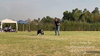Uriel y Kelev Ra Frisbee Dog Freestyle