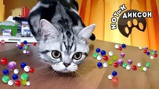 🐾😺  Котик Диксон. Охота за Орбиз. Смешное видео про кошек
