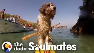 Guy Kayaking Across The Ocean Meets A Stray Dog | The Dodo Soulmates