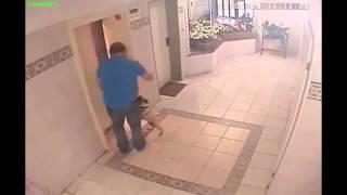 Женщина с собакой и лифт
