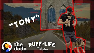 148-Pound German Shepherd Loses Over 40 Pounds | Ruff Life With Lee Asher